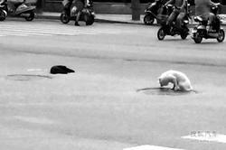 小狗街头遇车祸身亡 同伴车流中不愿离去