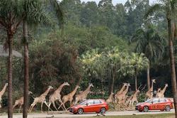 与创新BMW2系旅行车一起体验New Cool生活
