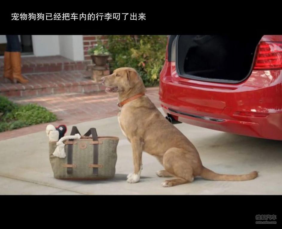 动物坐车图片大全