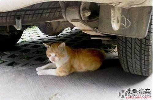 车底下的小动物】