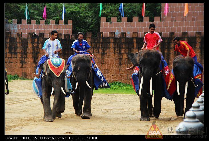 泰国曼谷三攀大象鳄鱼表演园