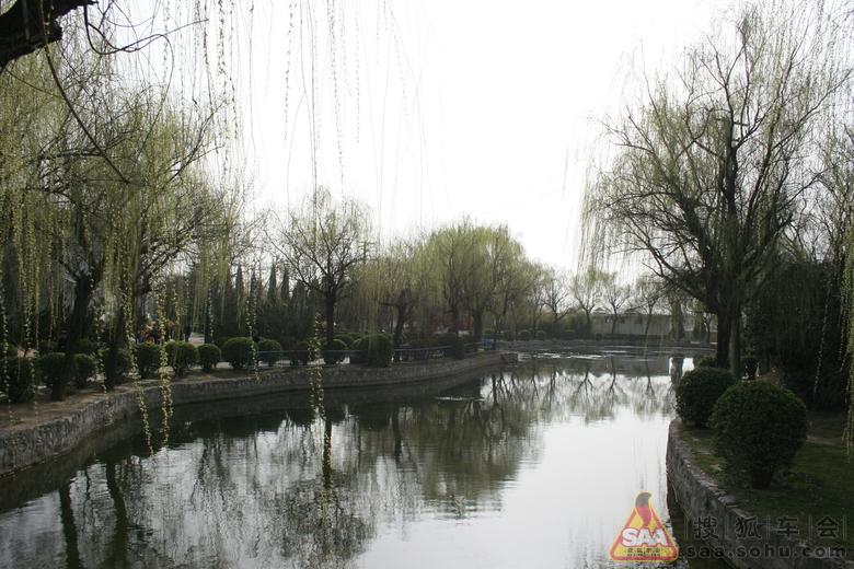 柳树发芽春天到--古渡公园