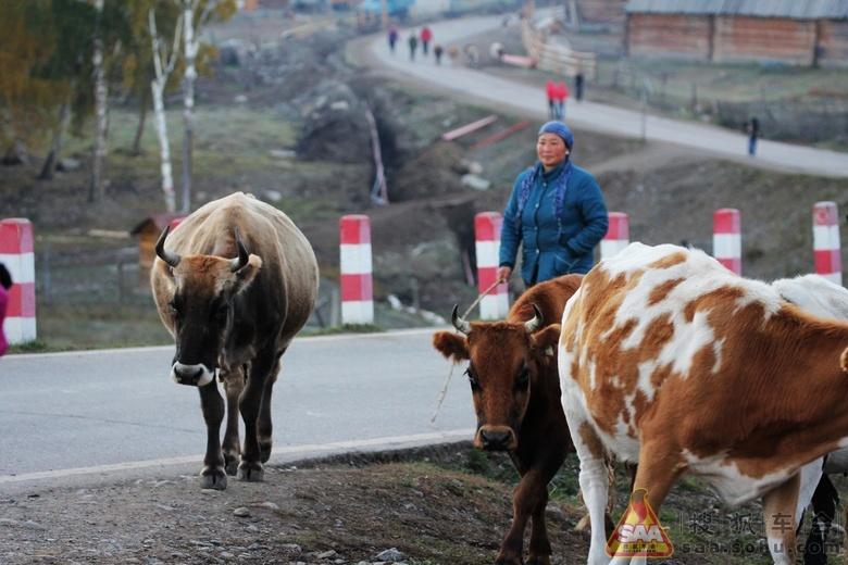 【动物世界】【热冰作品】牛啊牛
