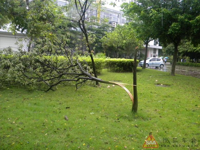 2012年有点猛的台风把树刮倒了