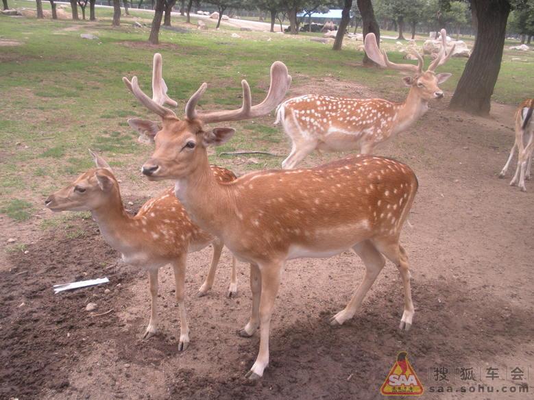再回首——西安秦岭野生动物园游记