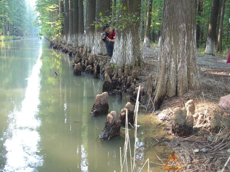 【畅游金湖】金湖的水上森林和白马湖